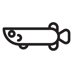 pet, wild, water, zoo, fish, animal, arapaima icon icon