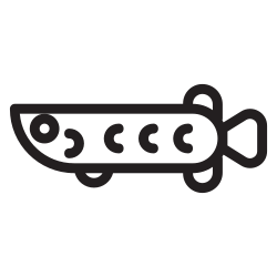 pet, wild, water, zoo, fish, animal, arowana icon icon
